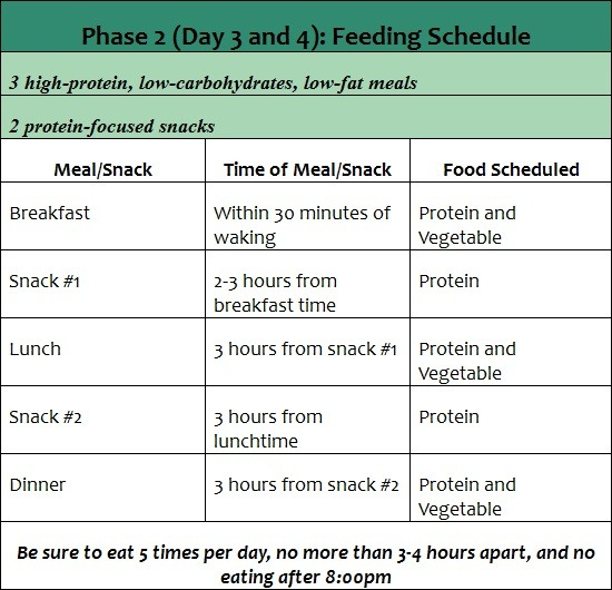 phase 2 the fast metabolism diet feeding schedule