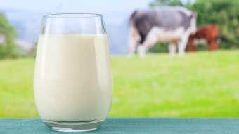 milk is good for an effective metabolism